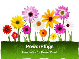 PowerPoint template displaying a number of colorful flowers with white background