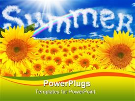PowerPoint template displaying a number of sunflowers with the word summer in the background