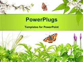 PowerPoint template displaying summer frame with green leaves, flowers and insects over white background