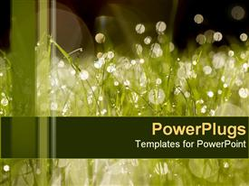 PowerPoint template displaying summerlight807