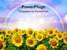 PowerPoint template displaying sunflower garden with a rainbow over them in the clouds