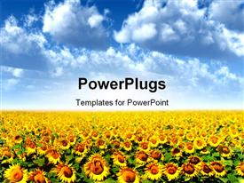 Field with dense sunflowers and clouds powerpoint theme
