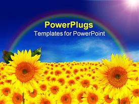 PowerPoint template displaying lots of sun flowers over a field with rainbow