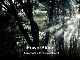 PowerPoint template displaying shafts of morning sunlight shining through trees and fog