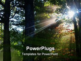 PowerPoint template displaying sun shining through the trees on a very misty fall day