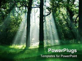 PowerPoint template displaying misty morning with ray of sunlight in the forest