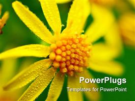 PowerPoint template displaying a big yellow flower on a green colored background