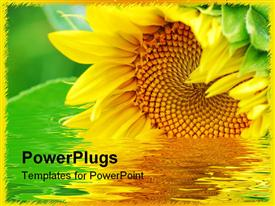 PowerPoint template displaying close up depiction of sunflower with some green leafs
