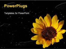 PowerPoint template displaying yellow sunflower close up in black background with white particles