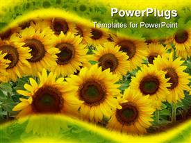 PowerPoint template displaying close up of yellow sunflowers on the field framed by transparent green and yellow waves