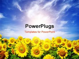 PowerPoint template displaying a field of sunflowers with sky in the background
