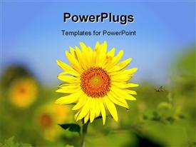 PowerPoint template displaying a bright yellow sun flower seed on an open field