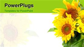 PowerPoint template displaying a number of sunflowers with white background
