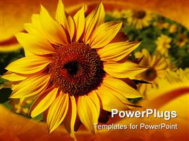 PowerPoint template displaying beautiful yellow sunflower in gardenwith nice frame