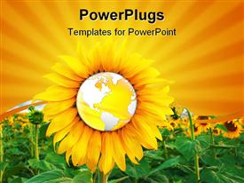 Sunflower and world concept. sunflower field. agriculture concept powerpoint template