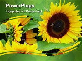 PowerPoint template displaying lots of yellow sun flowers on a green background