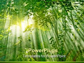 PowerPoint template displaying a beautiful scenery including sunlight in a forest and its effect