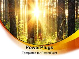 PowerPoint template displaying beautiful sunset in the woods, evening in the forest in the background.