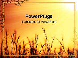 PowerPoint template displaying nice golden sunset over on wheat field in the background.