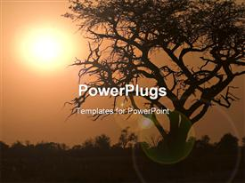 Sunrise In Moremi Game Reserve powerpoint template