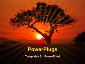 PowerPoint template displaying tree and sunset at Serengeti in the background.