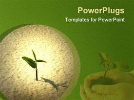 Single young plant sprouting from a sea of sand powerpoint template