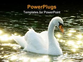 PowerPoint template displaying backlit mute swan (Cygnus color) on dark water bathing in golden light in the background.