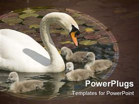 PowerPoint template displaying parent with baby swans swimming in a lake with water lilies leaves