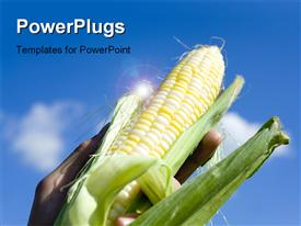 PowerPoint template displaying hand holding up fresh corn over blue cloudy sky