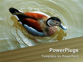 Teal swimming towards step with food scattered template for powerpoint