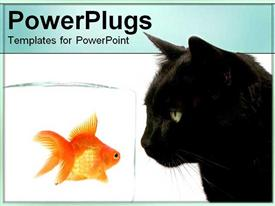 PowerPoint template displaying black scary cat looks at gold fish in glass beaker