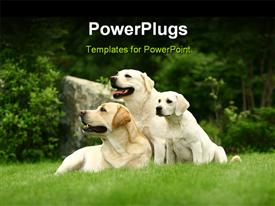 PowerPoint template displaying two big white dogs and puppy sitting in green grass