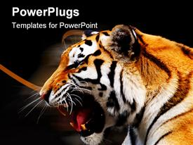 PowerPoint template displaying one Bengal big tiger on a black background