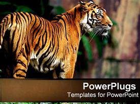 PowerPoint template displaying tiger in the jungle in the background.