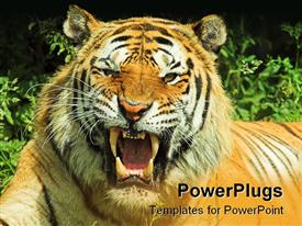 PowerPoint template displaying tiger snarl facing camera in the background.