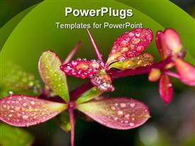 PowerPoint template displaying beautiful and colorful flowers and rain on their surface