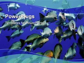 Exotic tropical fishes in Red sea stunning powerpoint theme