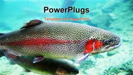Close-up image of Rainbow Trout powerpoint theme