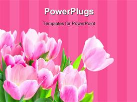 PowerPoint template displaying a number of roses with pinkish lines in the background