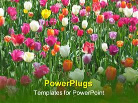 Bed of tulips powerpoint design layout
