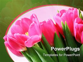 PowerPoint template displaying a bunch of pink tulip flowers on a green background