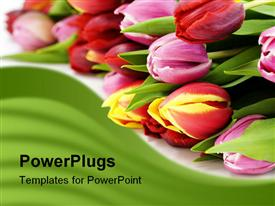 PowerPoint template displaying fresh tulips on white background. With sample text in the background.