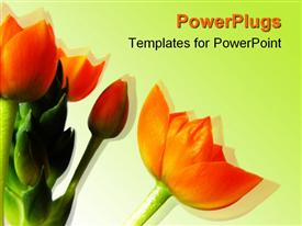 PowerPoint template displaying a bunch of bright orange flowers on a white background