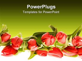 PowerPoint template displaying a number of flowers with greenish background