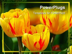 PowerPoint template displaying a lot of yellow flowers with greenish background