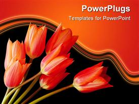 Spring tulips in an arrangement as light falls on them from the side template for powerpoint