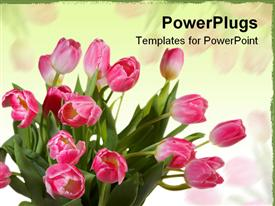 PowerPoint template displaying bunch of yellow and pink flowers with yellow background