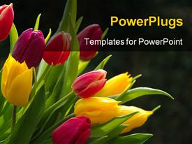 Tulips presentation background