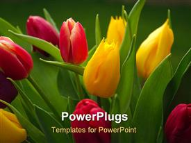 Tulips powerpoint design layout