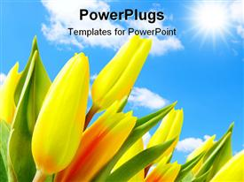 PowerPoint template displaying tulips against blue sky with a clouds